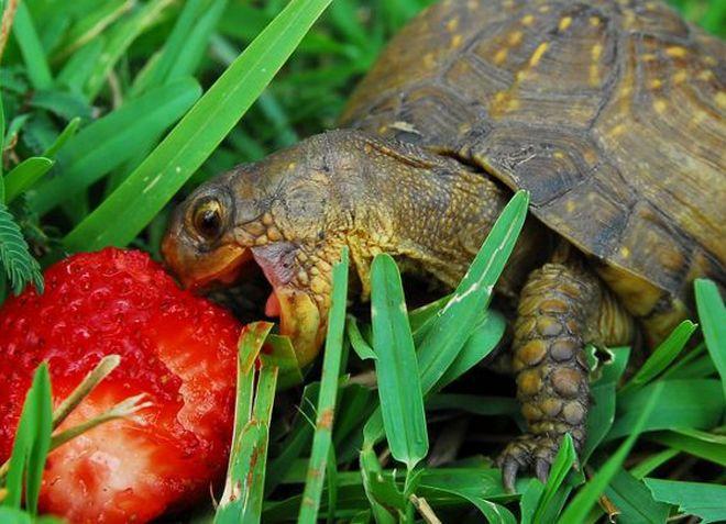 cum și-a pierdut țestoasa în greutate