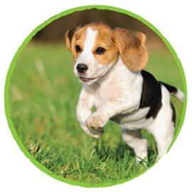 cum să-mi fac beagle să slăbească