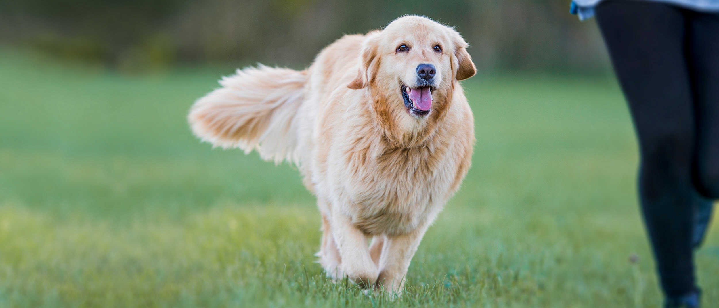 Câinele gras este un câine bolnav | de la Petissimo