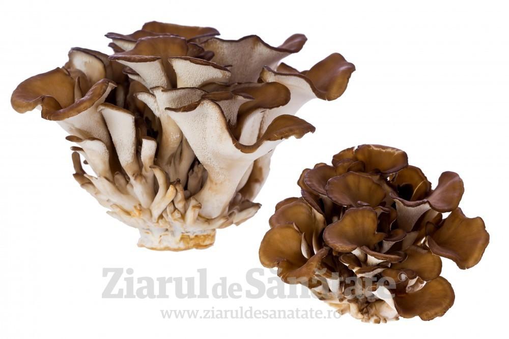 Pierdere în greutate prin ciuperci Veselka