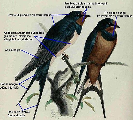 pierderea în greutate pe drumul păsărilor)