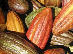 cacao nibs slabire