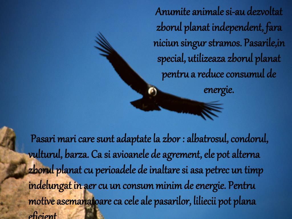 Ken Follett - Pe aripi de vultur. Ed. - papaieftin.ro