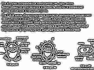 gemeni studiu de pierdere în greutate)