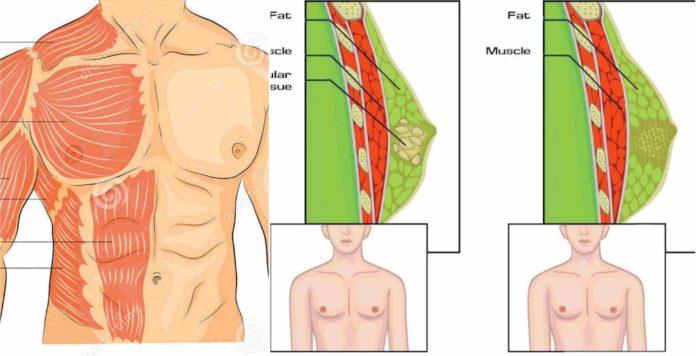 Cum să pierzi grăsimea corporală (femei) | papaieftin.ro