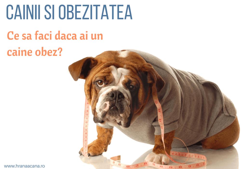 cum să-mi fac beagle să slăbească)