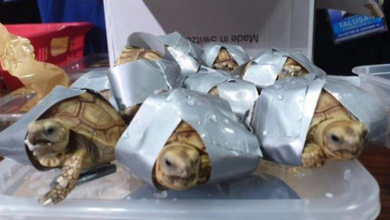 cum și-a pierdut țestoasa în greutate)