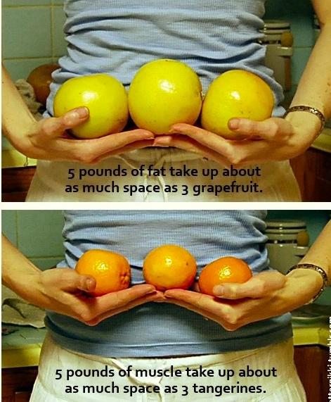 pierderea de grăsime frenezie Pierdere în greutate mgtow