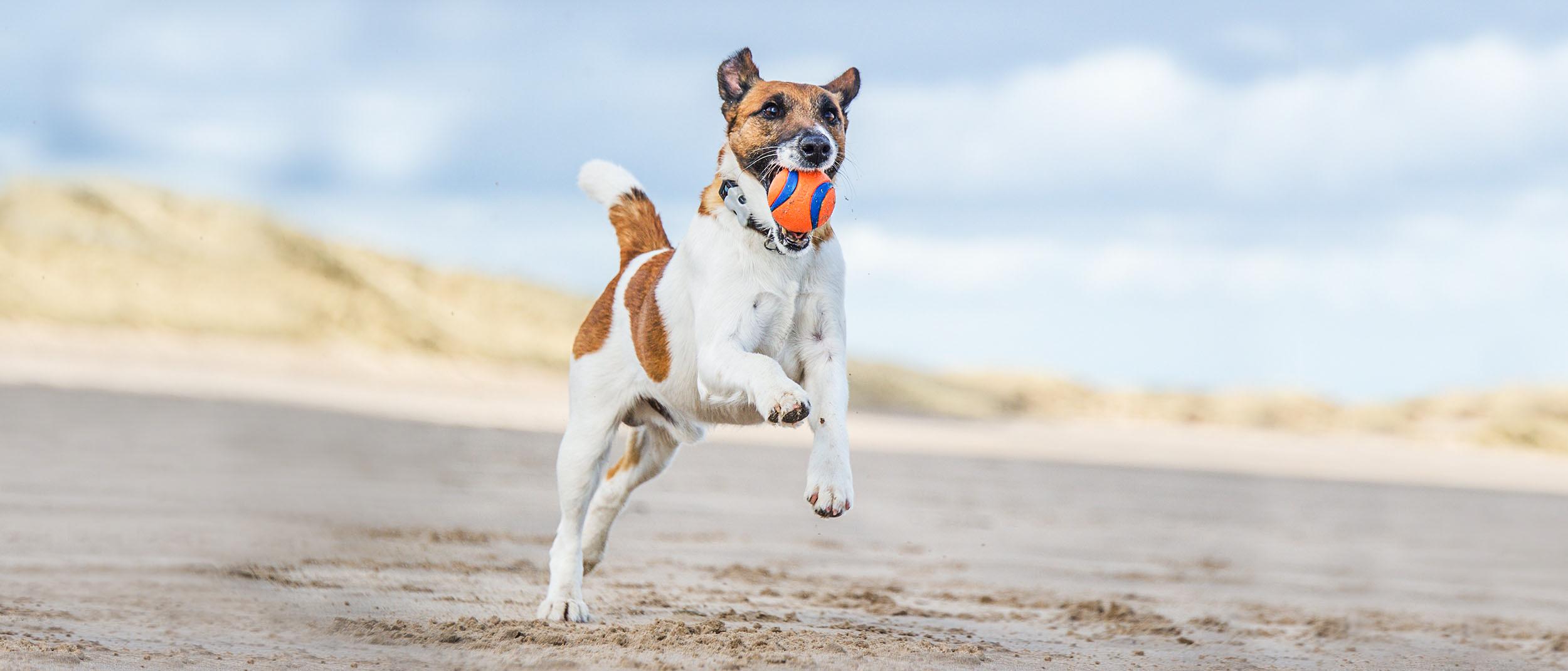 studiu de pierdere în greutate canină)