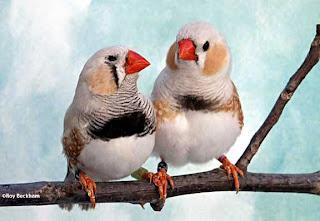 pierderea în greutate în drumul de păsări cum să pierdeți în greutate în timp ce pe cymbalta