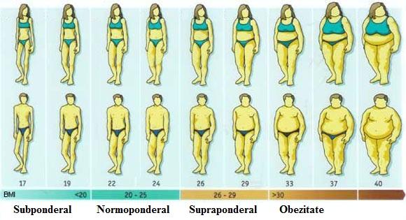 Calculator - procent de grăsime corporală