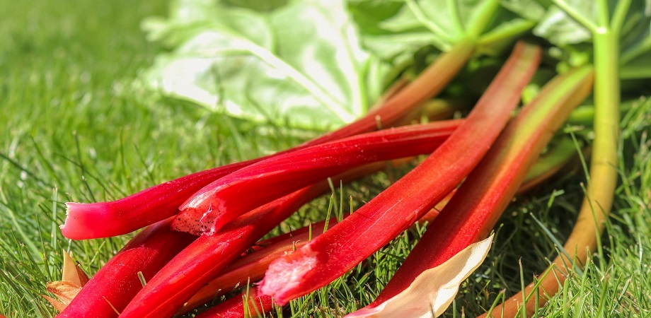 este rhubarb bun pentru pierderea în greutate)