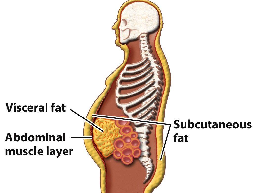 noua cercetare de pierdere a grasimilor